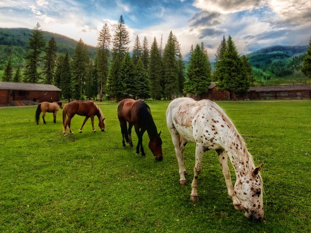Free Horses Grazing Country Nice Wallpaper