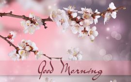 Free Good Morning Wallpapers Download