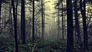 Dark Woods HD Backgrounds