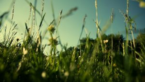 Desktop Grass HD Wallpapers