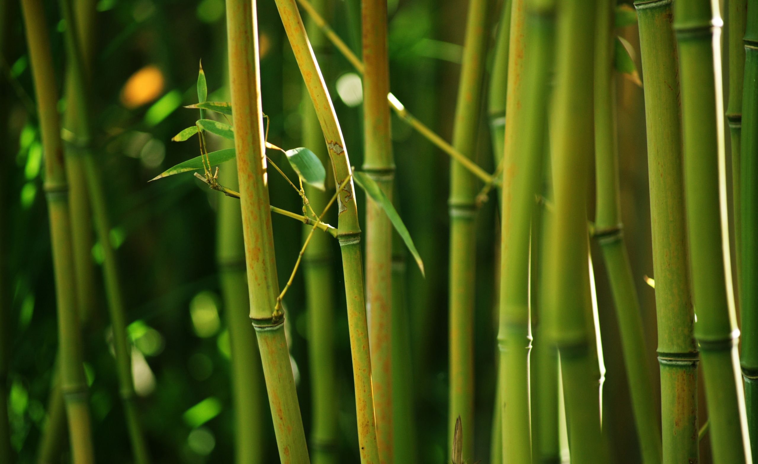 images-bamboo-wallpaper-hd | wallpaper.wiki