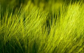 HD Wallpaper Grass Download