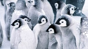 Free Penguin Backgrounds Download