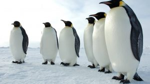 Penguin Backgrounds HD