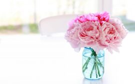 Peony HD Wallpapers