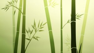 HD Bamboo Backgrounds Download