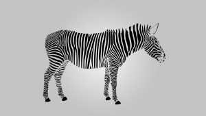 Desktop Zebra wallpaper HD