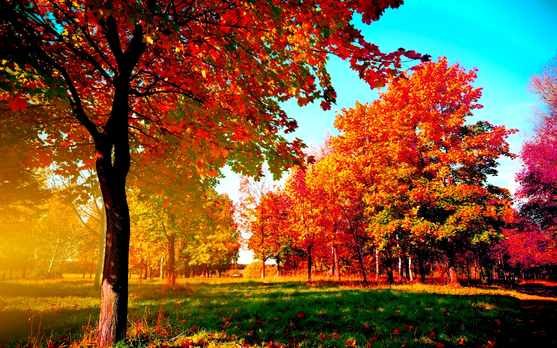autumn trees wide desktop background