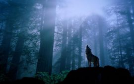 Wolf Wallpaper HD free download