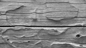 Free Wood Grain Wallpapers Download