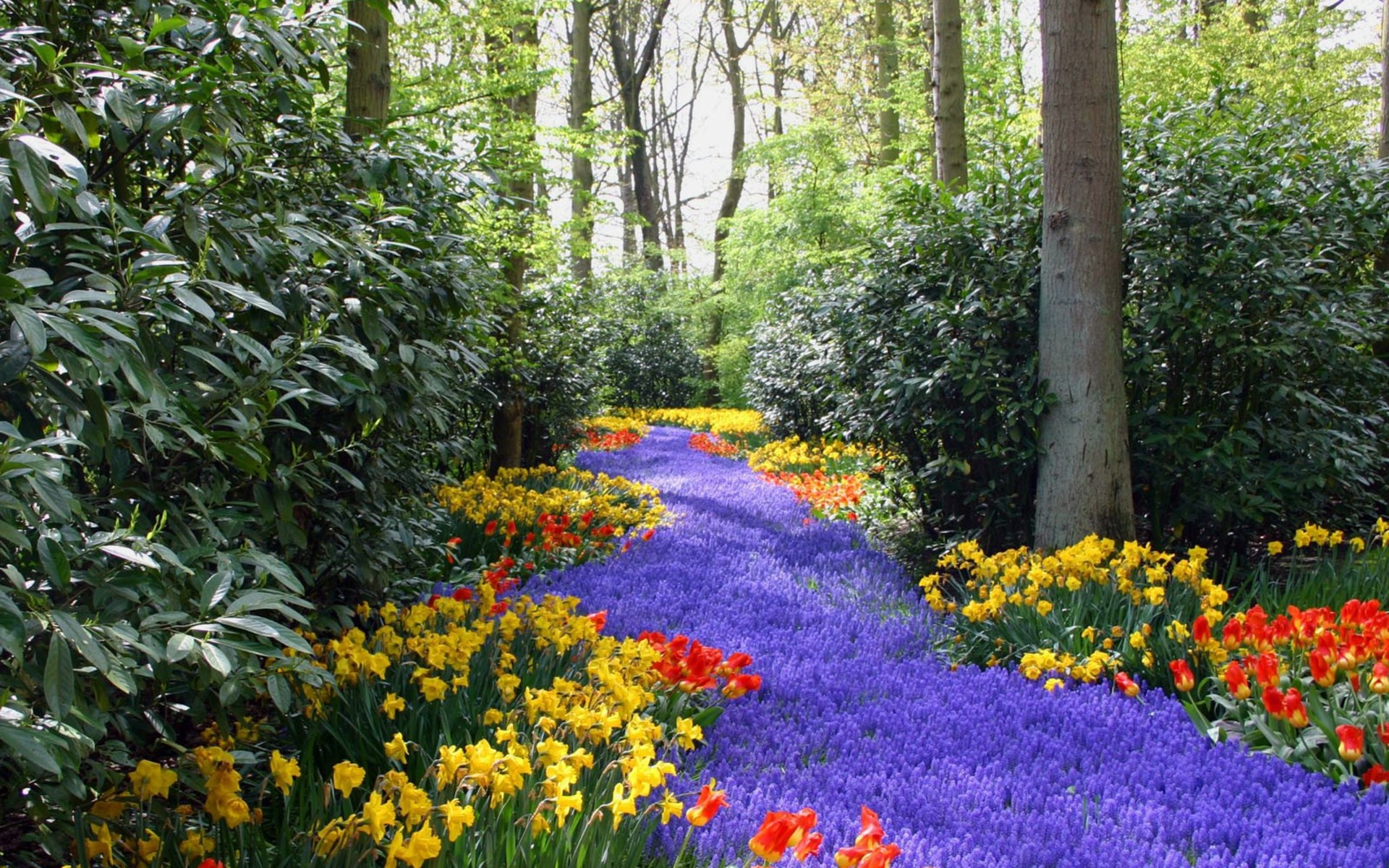 wallpaper.wiki-Amazing-Colorful-Flowers-Images-PIC-WPE0012596 ...