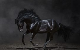Download Free Black Horse Backgrounds
