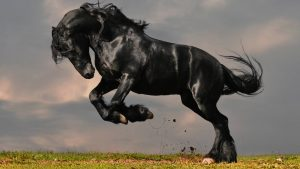 Black Horse HD Backgrounds