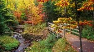 Download Free Fall Foliage Wallpapers