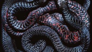 Viper Snake Backgrounds HD