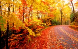 Fall Foliage Backgrounds Free Download