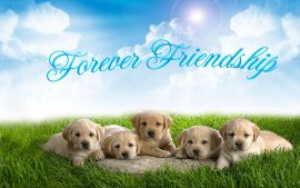 HD Best Friends Forever Backgrounds