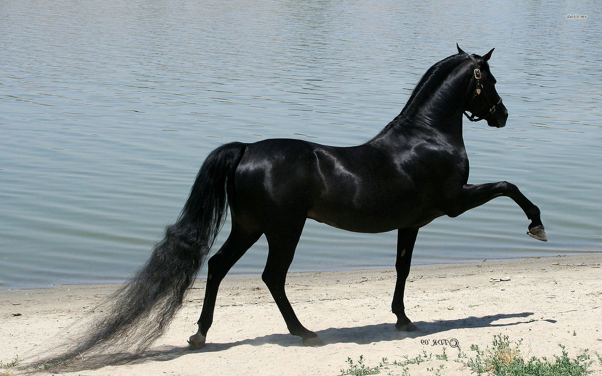Wallpaperwiki HD Black Horse Picture PIC WPE0011673
