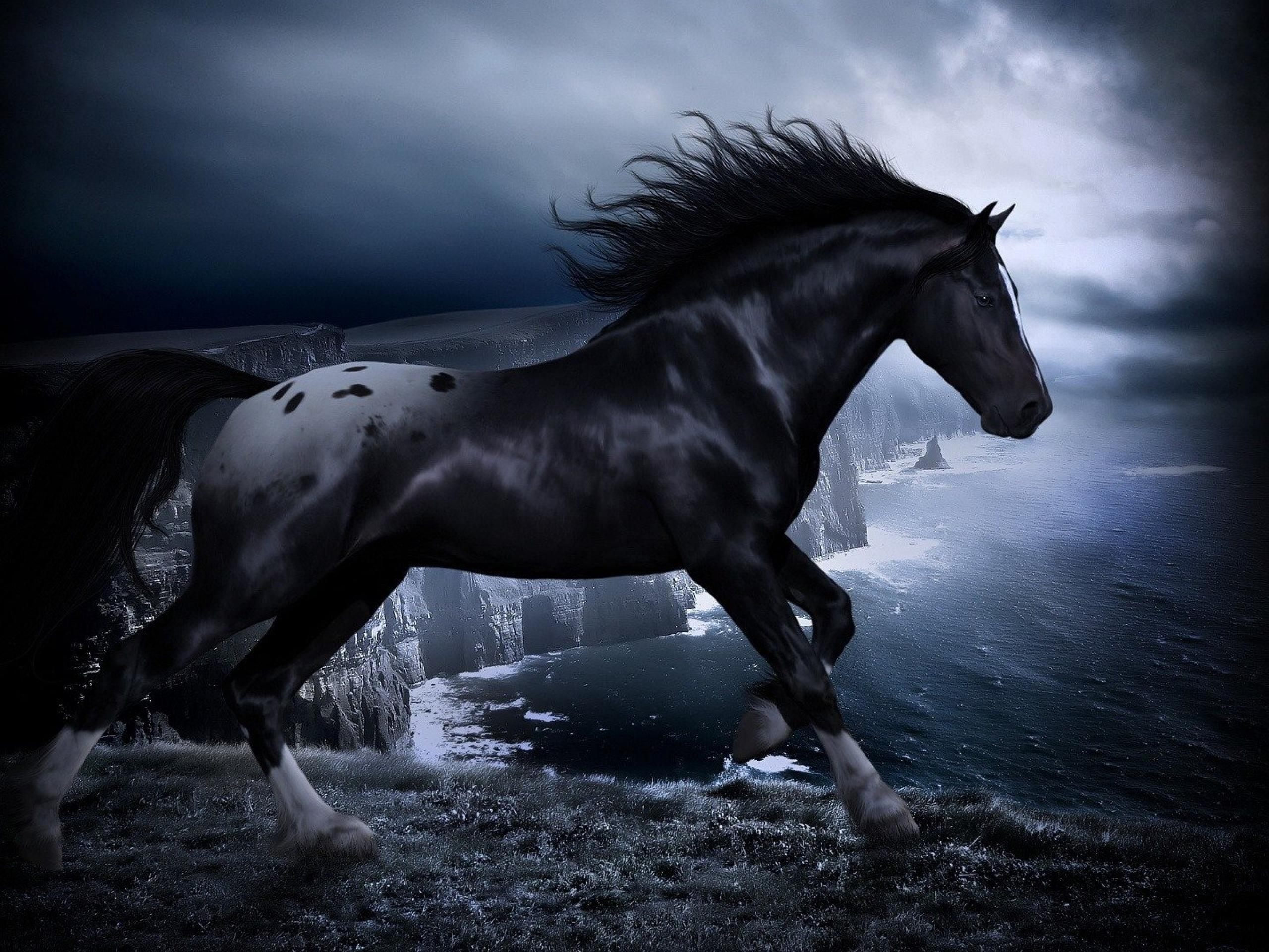 Wallpaperwiki HD Black Horse Wallpapers PIC WPE005557