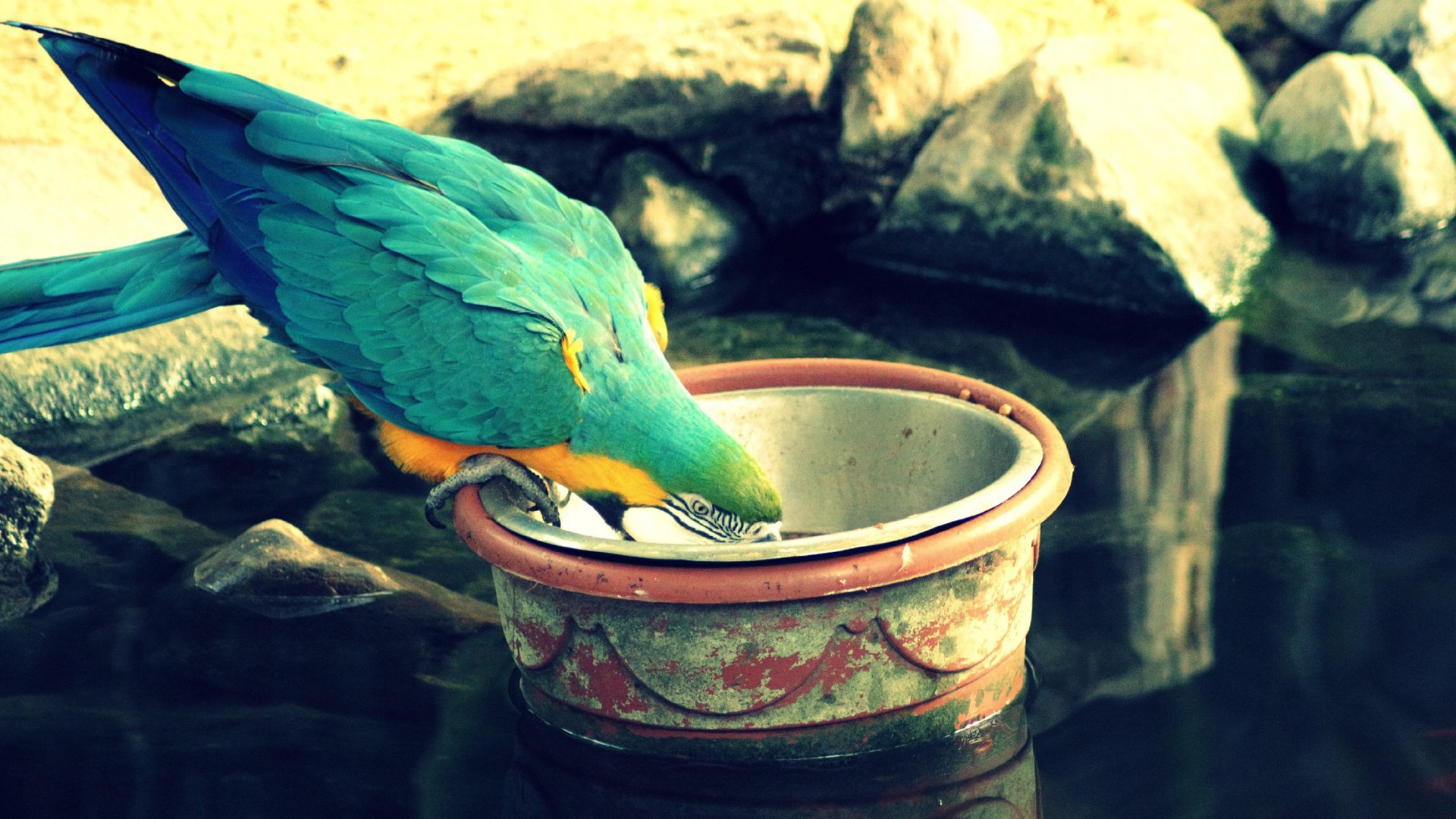 wallpaper.wiki-New-birds-parrots-1920x1080-wallpapers-PIC-WPE0013053