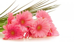 Pink Flowers HD Images