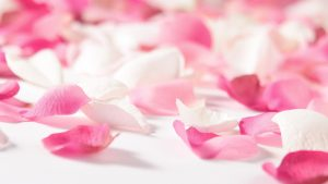 Pink Flowers Wallpapers HD