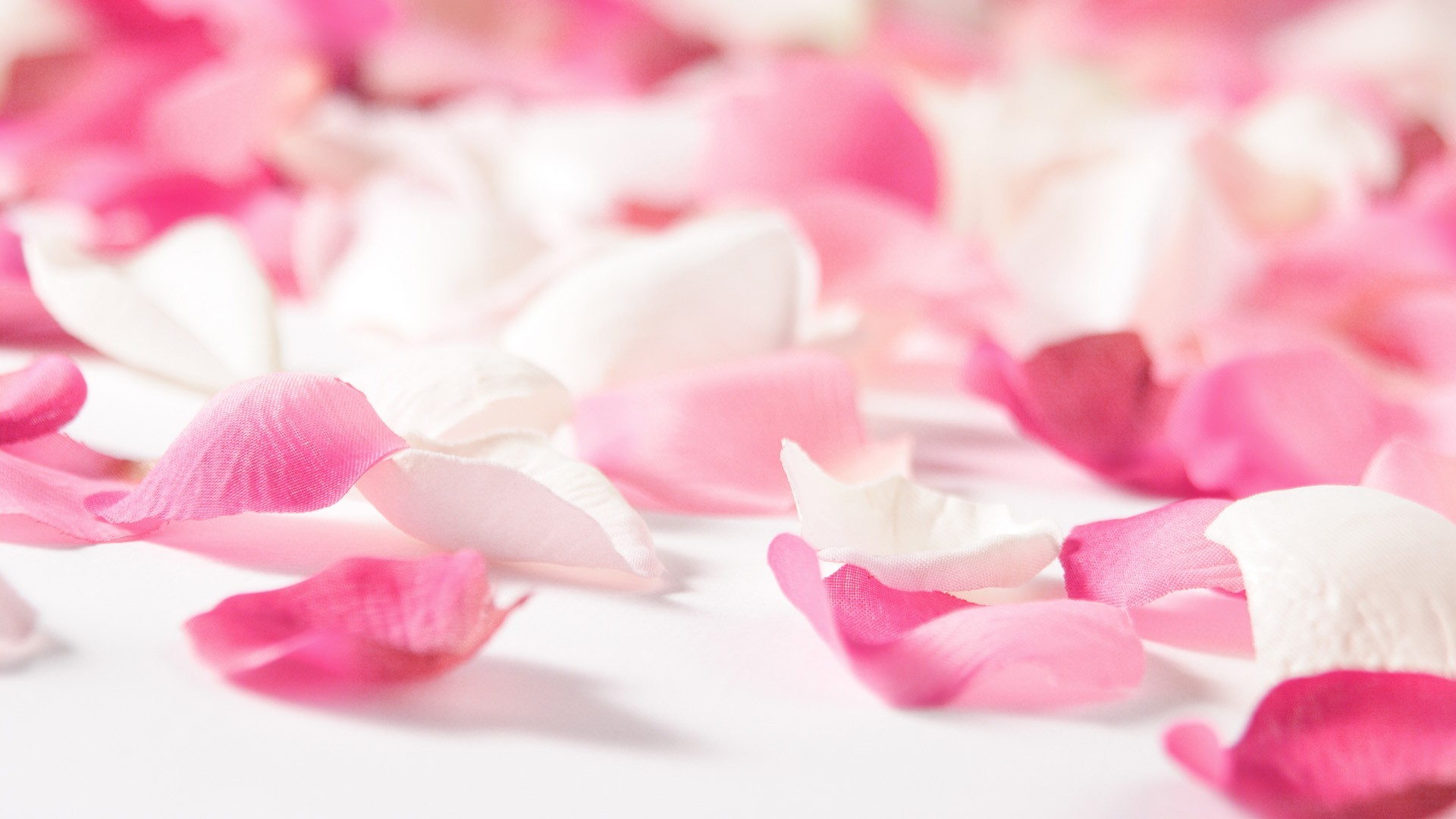 Pink flowers wallpapers hd wallpaper mightylinksfo