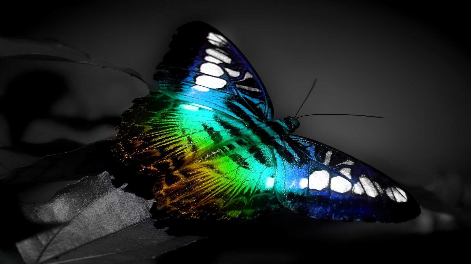 colorful-butterfly-3d-full-hd-wallpaper | wallpaper.wiki