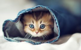 Lovely Cat Wallpaper HD