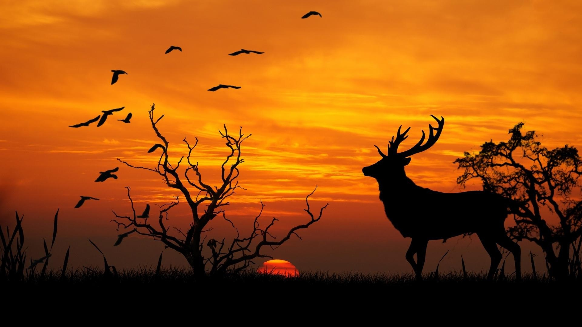 Deer Home Birds Animal Sun Sunset Sky Wildlife Forest Nature