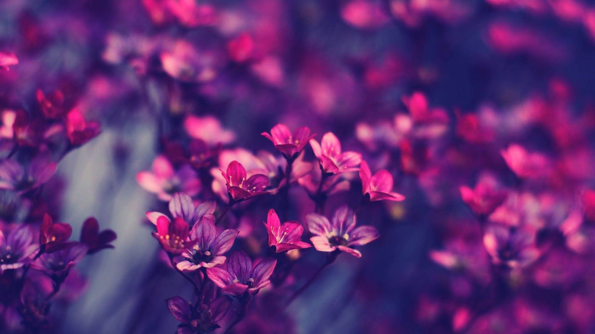 Desktop flowers wallpaper full screen hd wallpaper download mightylinksfo
