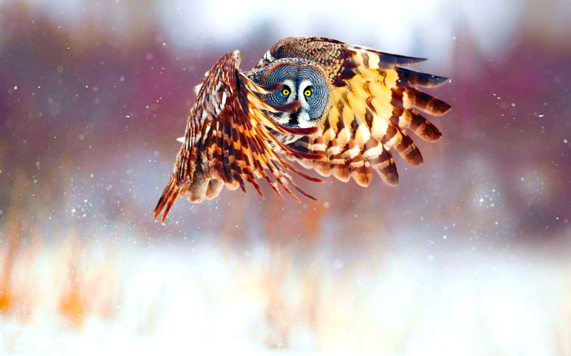 desktop-owl-wallpapers-hd | wallpaper.wiki