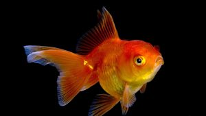 Fish Wallpapers HD