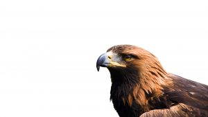 HD Eagle Backgrounds