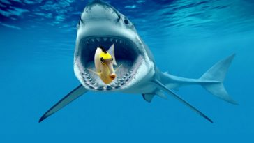 Great-white-shark-backgrounds
