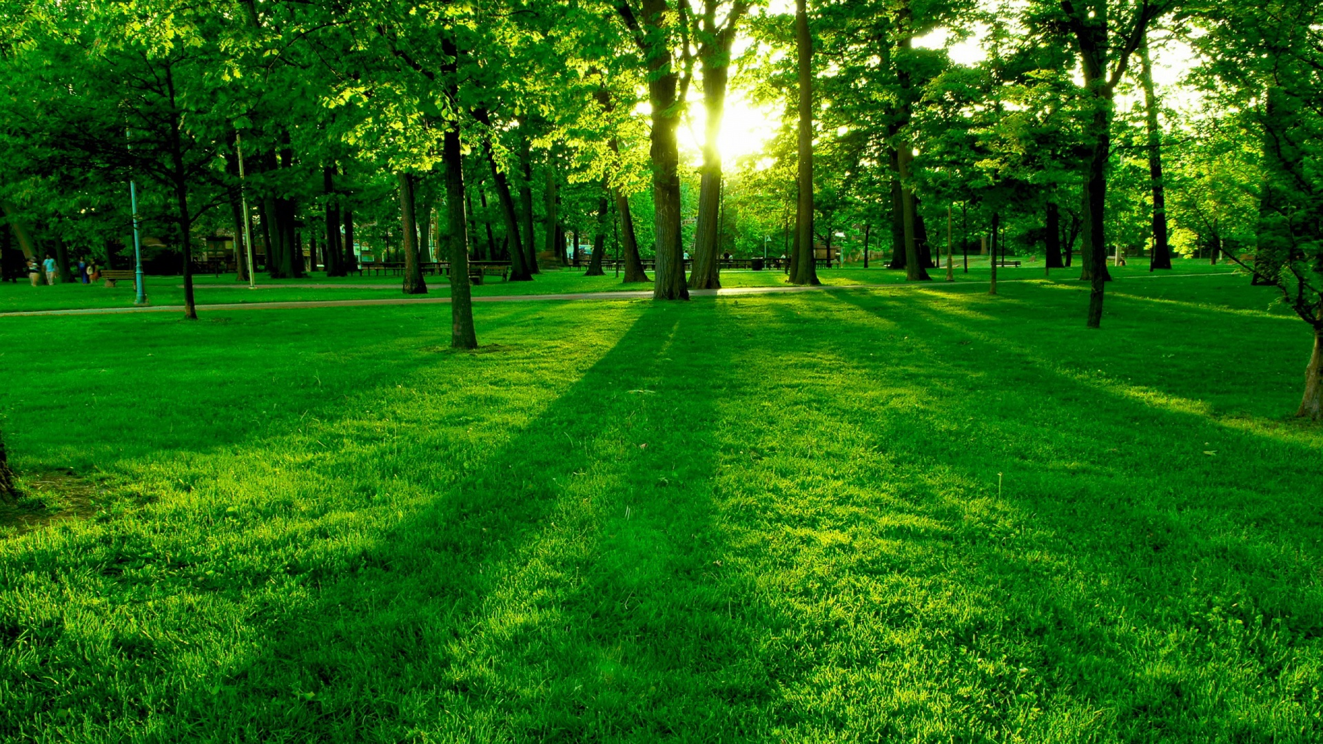 Green-Park-Wallpaper-Free-Mobile-Phone-Wallpapers-HD