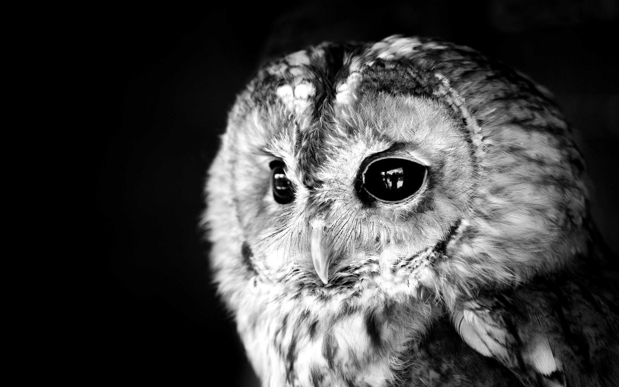 hd-owl-wallpapers-backgrounds-download | wallpaper.wiki