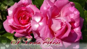 Flower I Love You Wallpaper