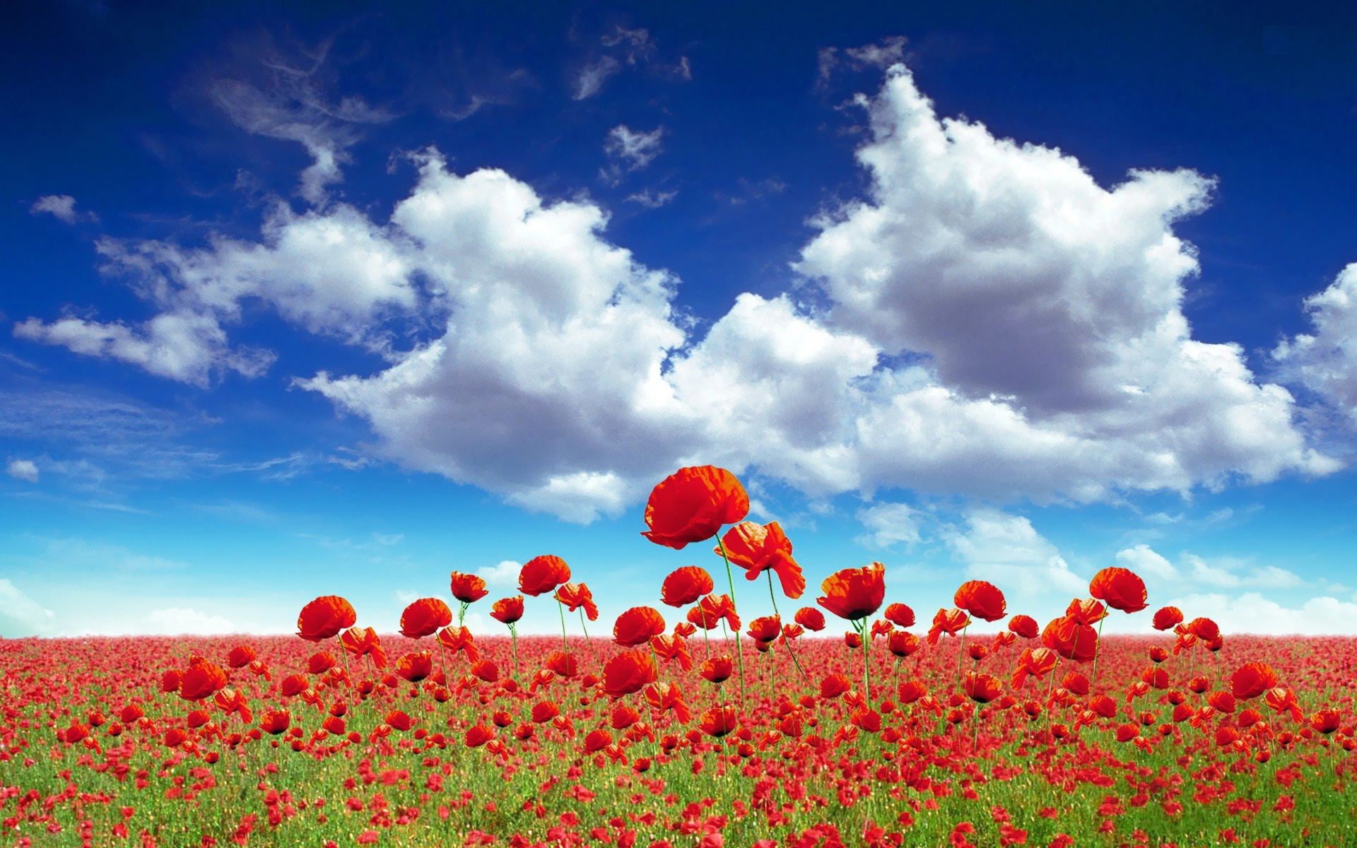 Poppy Field Flower Background Wallpaper