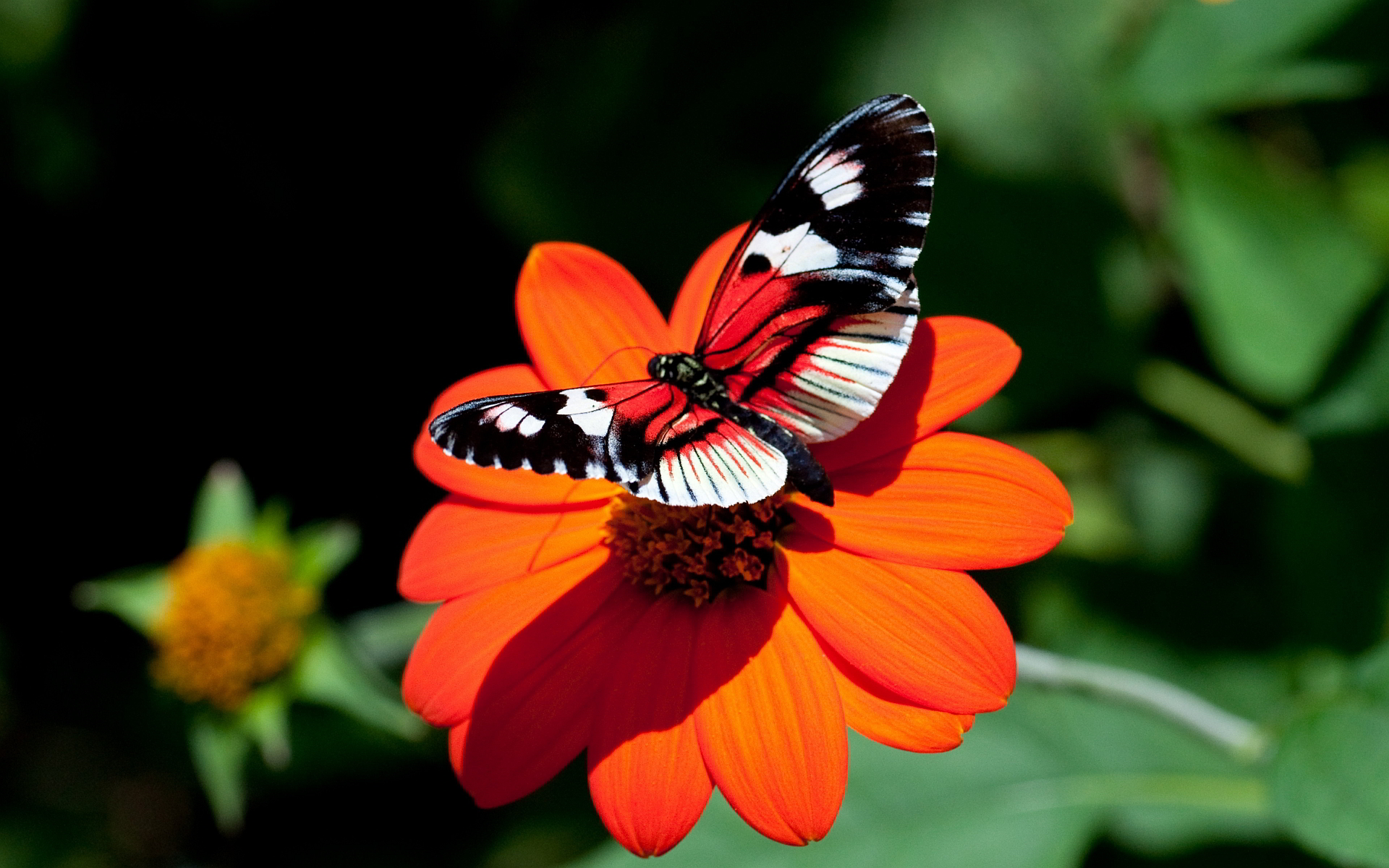 red-butterfly-wallpaper-designs | wallpaper.wiki