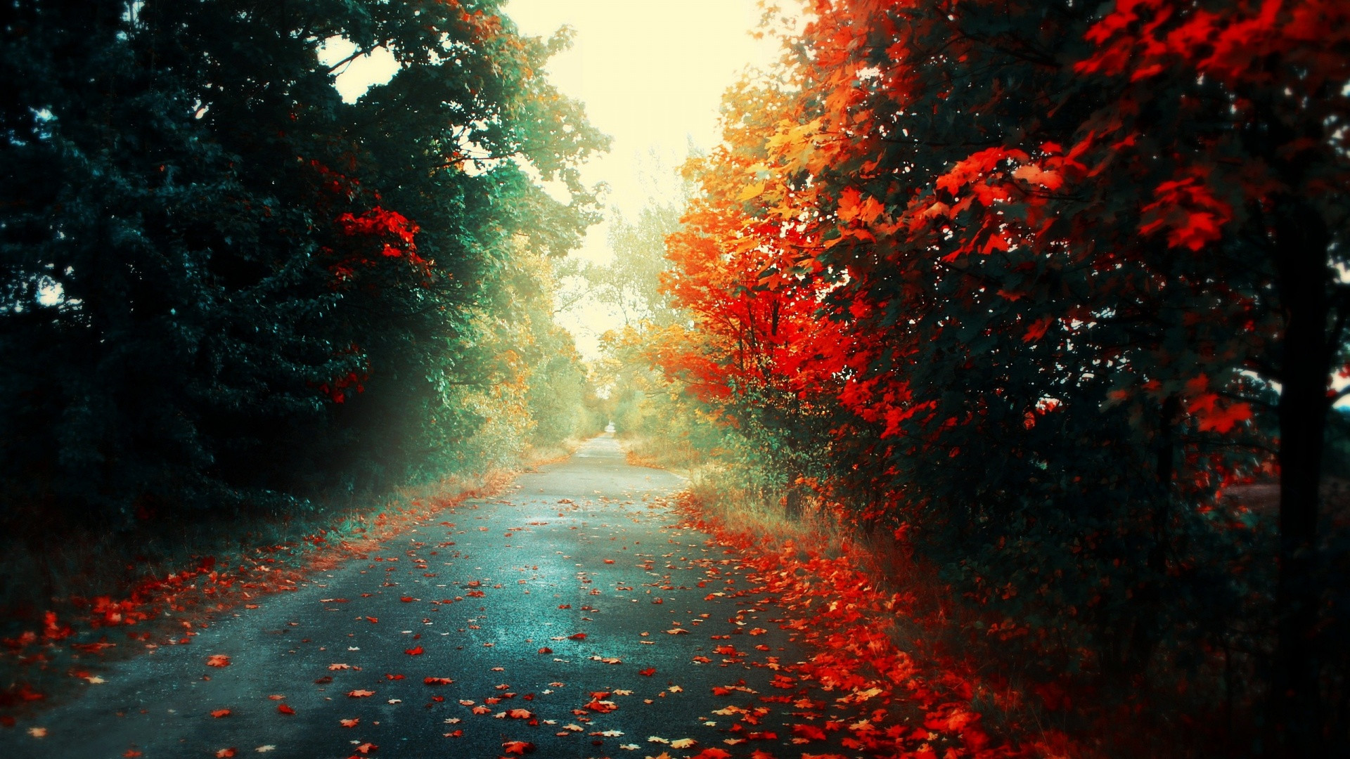 Road Autumn Wallpapers HD