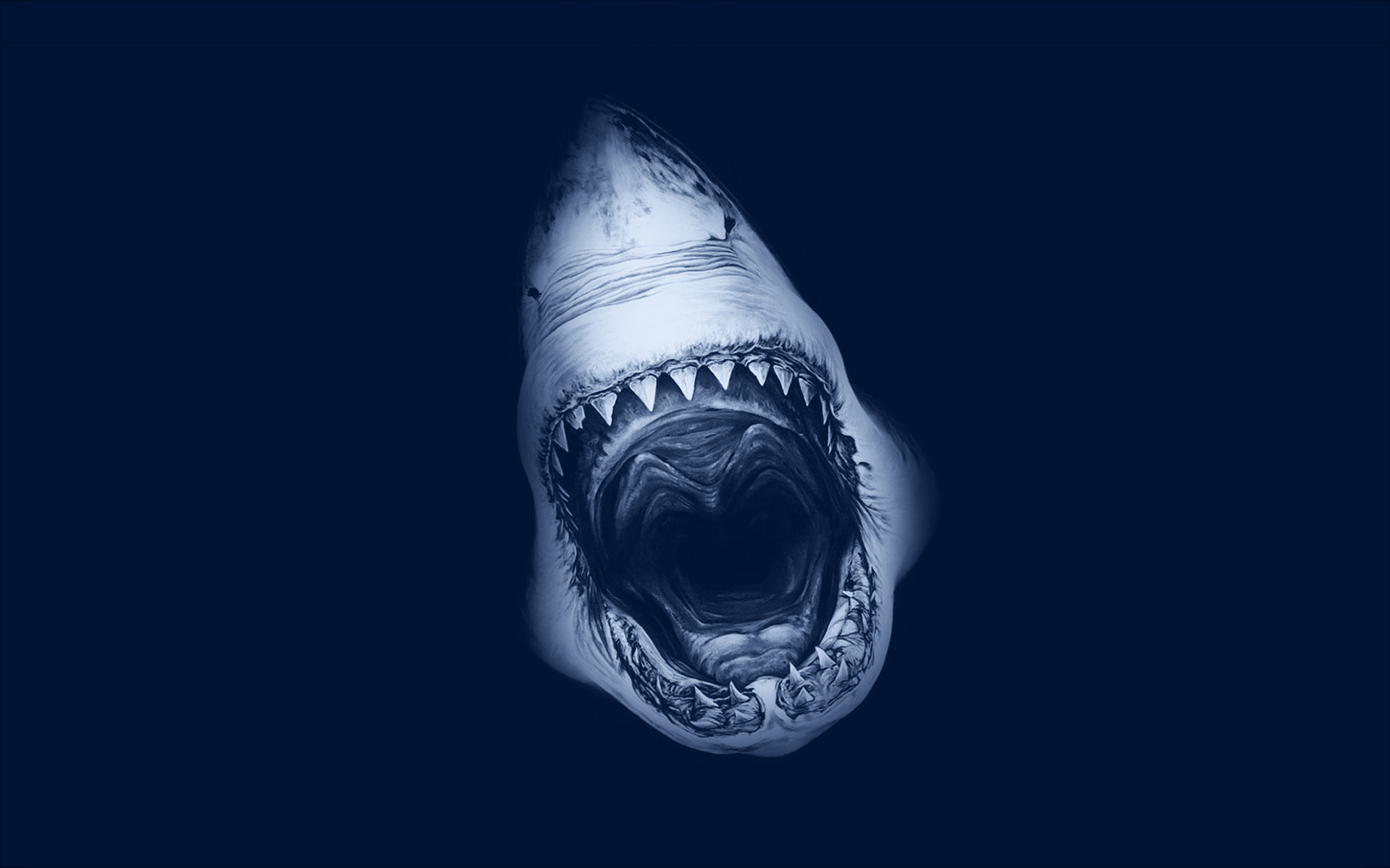 Shark-attack-art-backgrounds