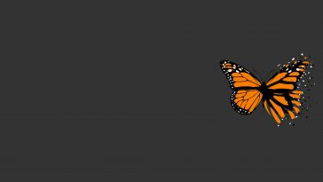 orange and black butterfly with simple grey background