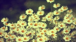 HD Vintage Flower Backgrounds
