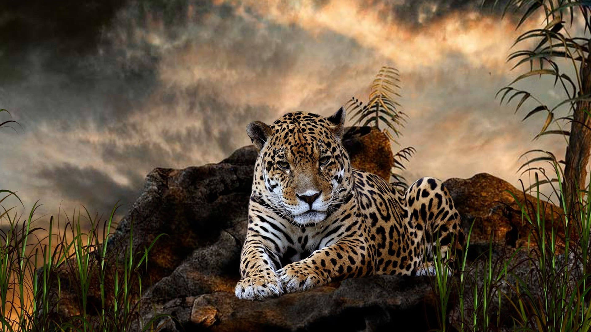 Animals Jaguars Wallpapers Hd Desktop And Mobile: Leopard Wallpapers HD